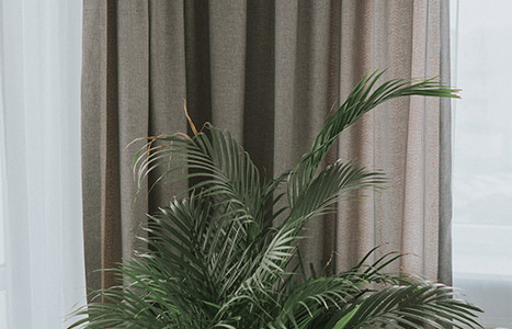 zasłona i roślina